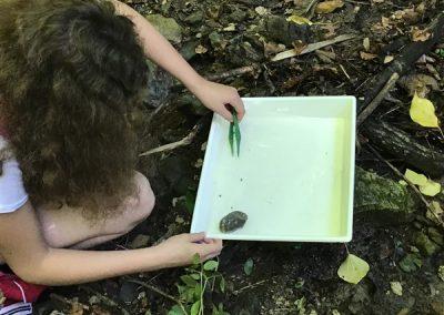 ND Organizmi celinskih voda (6)